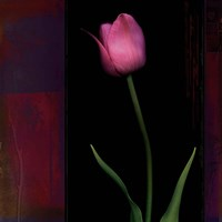 Red Tulip II Fine Art Print