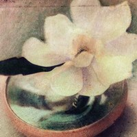 Nature's Blossoms III Fine Art Print