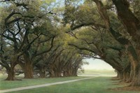 Alley Of The Oaks Fine Art Print