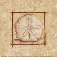 "9"" x 9"" Sand Dollar Pictures"