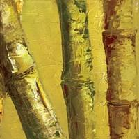 Bamboo Columbia IV Fine Art Print