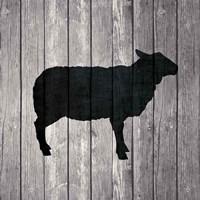 Barn Sheep Fine Art Print