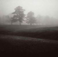 Fog Tree Study II Fine Art Print