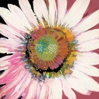 Sunshine Flower I Framed Print