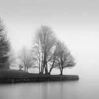 Fog and Trees at Dusk Fine Art Print