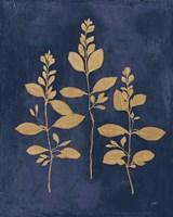 Botanical Study IV Gold Navy Fine Art Print