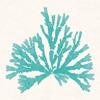 Pacific Sea Mosses IV Aqua Framed Print