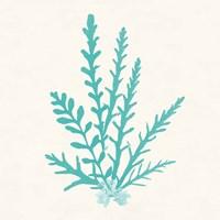 Pacific Sea Mosses III Aqua Framed Print
