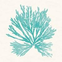 Pacific Sea Mosses II Aqua Framed Print