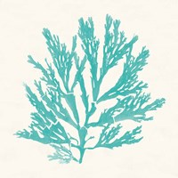 Pacific Sea Mosses I Aqua Framed Print