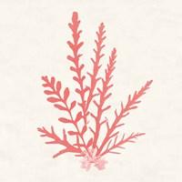 Pacific Sea Mosses III Coral Fine Art Print