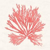 Pacific Sea Mosses II Coral Fine Art Print