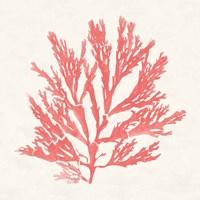 Pacific Sea Mosses I Coral Fine Art Print