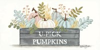 U-Pick Pumpkins Fine Art Print