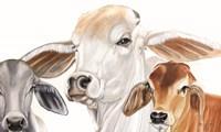 Ranch Life Fine Art Print