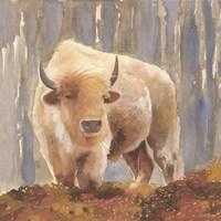 White Buffalo Fine Art Print