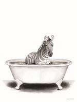 Zebra in Tub Framed Print
