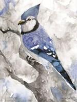 Blue Jay 2 Fine Art Print
