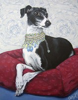 Italian Greyhound on Red Fine Art Print