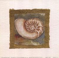 Spiral Shell Fine Art Print