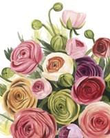 Ranunculus Study I Fine Art Print