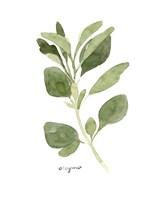 Herb Garden Sketches III Fine Art Print