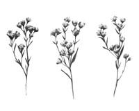Wild Thistle V Fine Art Print
