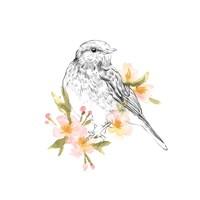 Robin Sketch I Fine Art Print