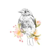 Robin Sketch II Fine Art Print