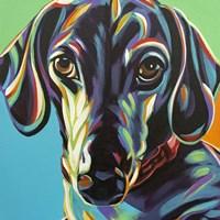Painted Dachshund I Fine Art Print
