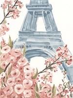 Paris Cherry Blossoms I Framed Print