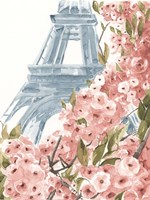 Paris Cherry Blossoms II Fine Art Print