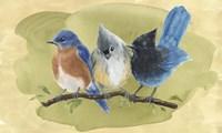 Bird Perch III Fine Art Print