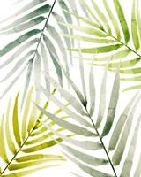 Shady Palm I Fine Art Print