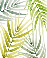 Shady Palm II Fine Art Print