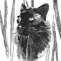 Still Cat I Fine Art Print