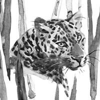 Still Cat II Fine Art Print
