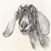 Farm Portrait I Framed Print