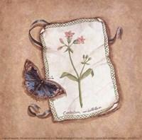 Centarium Fine Art Print