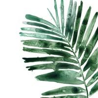 Tropical Jewel VII Fine Art Print