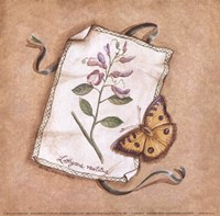 Lathyrus Fine Art Print