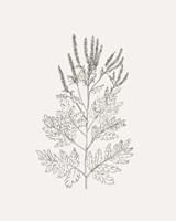 Wild Foliage Sketch II Fine Art Print