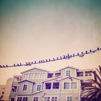 Birds on Wires I Fine Art Print