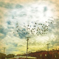 Birds on Wires V Fine Art Print