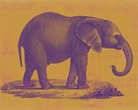 Safari Pop I Fine Art Print