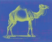 Safari Pop III Fine Art Print