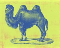 Safari Pop IV Fine Art Print
