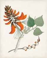 Botanical of the Tropics I Fine Art Print