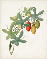Botanical of the Tropics III Fine Art Print