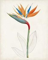 Botanical of the Tropics IV Fine Art Print